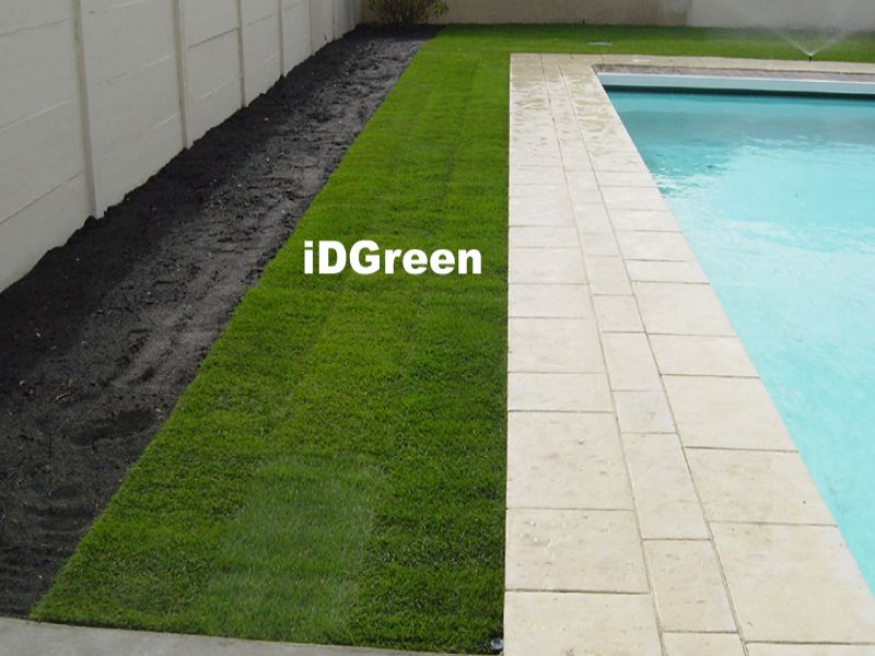 Gazon en rouleau tour de piscine idgreen pelouse et gazon - Prix gazon en plaque ...